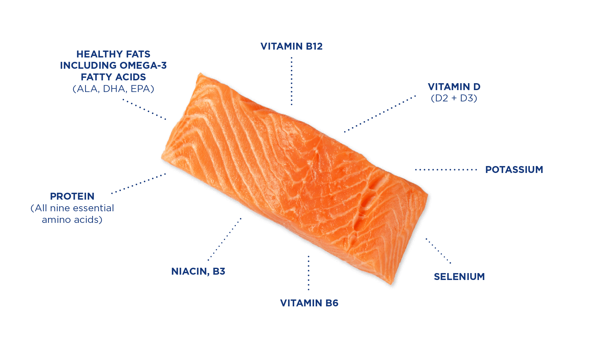 Salmon_Graphic_nutrients_ENGLISH.png#asset:5169