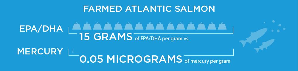 Farmed Atlantic salmon contains more than 15 grams of EPA/DHA per gram, and just 0.05 micrograms of mercury per gram.