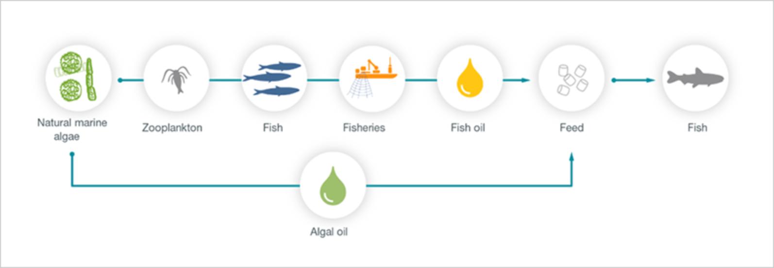 Tackling Global Challenges Through Innovation Algae