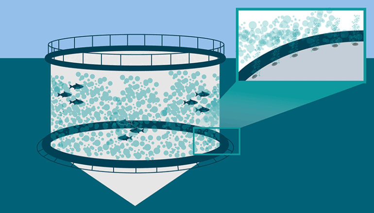 One method to prevent the issue of sea lice in salmon farms is non-medicinal, using a bubble curtain
